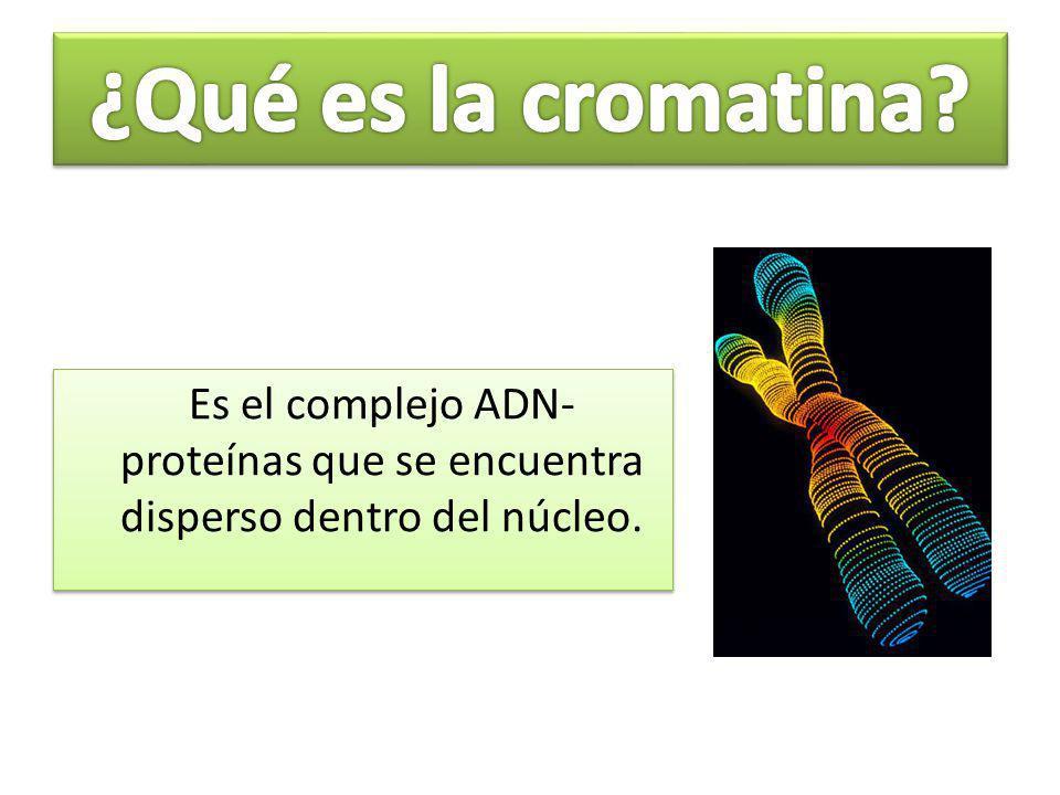 Cromatina Heterocromatina Constitutiva Facultativa Eucromatina Activa