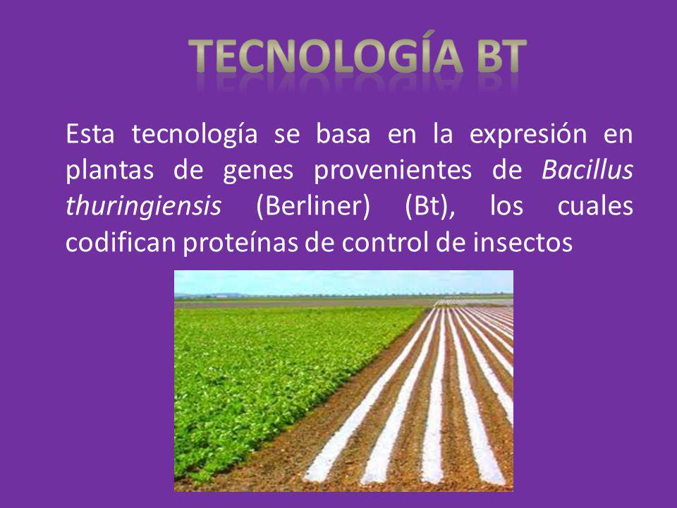Esta tecnología se basa en la expresión en plantas de genes provenientes de Bacillus thuringiensis (Berliner) (Bt), los cuales codifican proteínas de