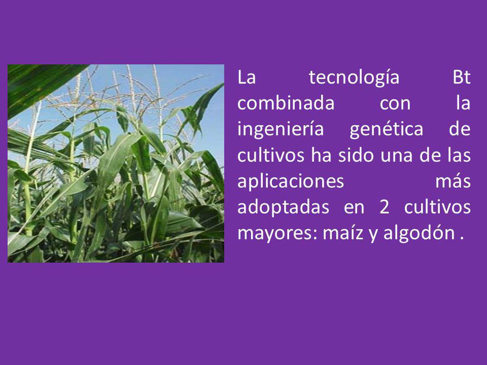 La tecnología Bt combinada con la ingeniería genética de cultivos ha sido una de las aplicaciones más adoptadas en 2 cultivos mayores: maíz y algodón.