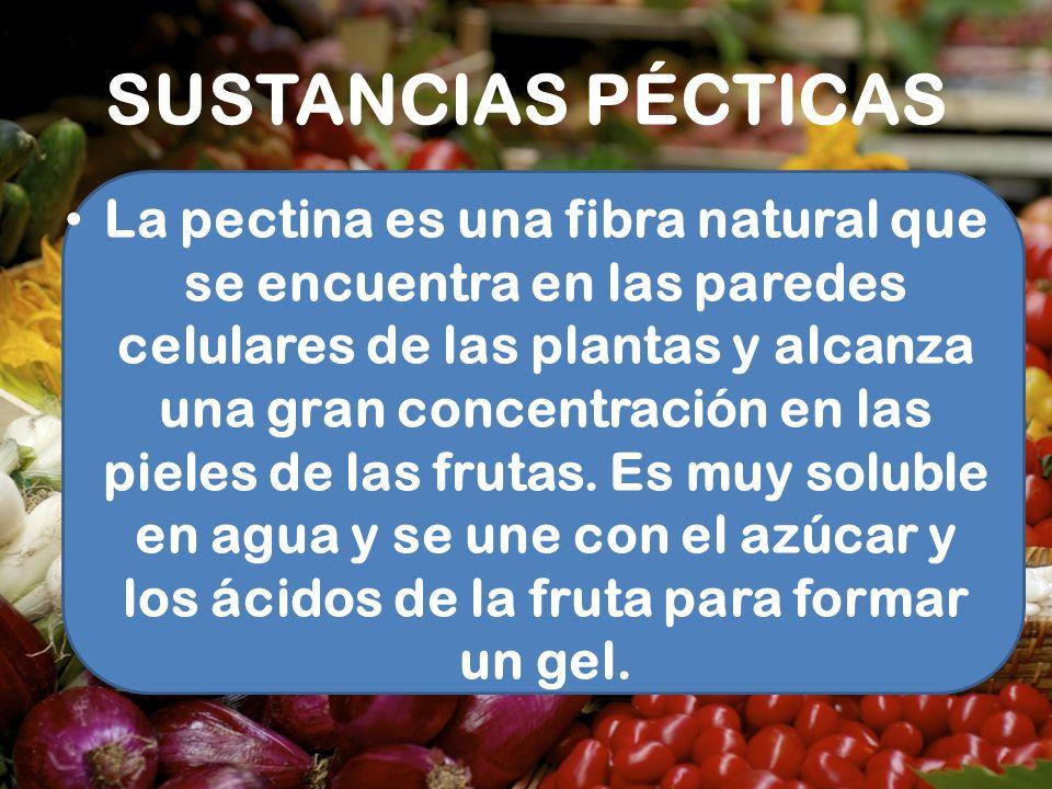 SUSTANCIAS PÉCTICAS La pectina es una fibra natural que se encuentra en las paredes celulares de las plantas y alcanza una gran concentración en las p