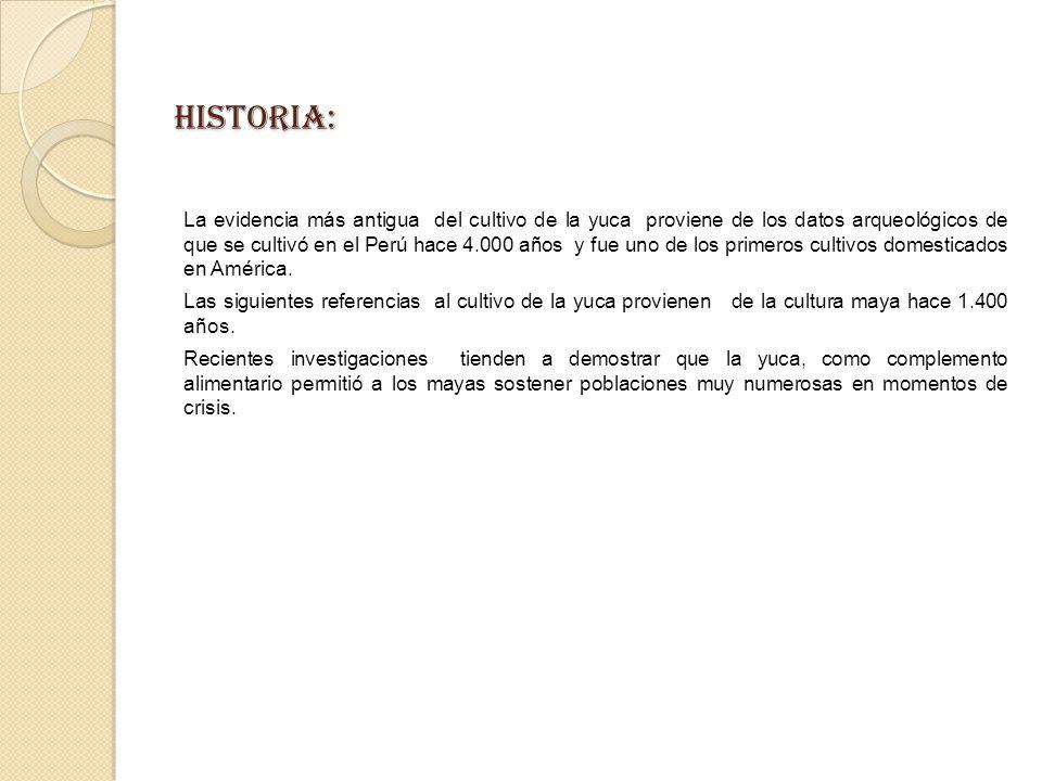 HISTORIA: La evidencia más antigua del cultivo de la yuca proviene de los datos arqueológicos de que se cultivó en el Perú hace 4.000 años y fue uno de los primeros cultivos domesticados en América.