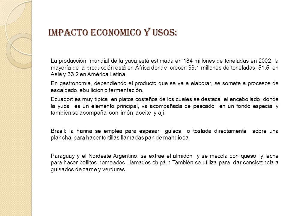 IMPACTO ECONOMICO Y USOS: La producción mundial de la yuca está estimada en 184 millones de toneladas en 2002, la mayoría de la producción está en África donde crecen 99.1 millones de toneladas, 51.5 en Asia y 33.2 en América Latina.