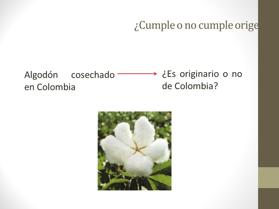 ¿Cumple o no cumple origen? Algodón cosechado en Colombia ¿ Es originario o no de Colombia?
