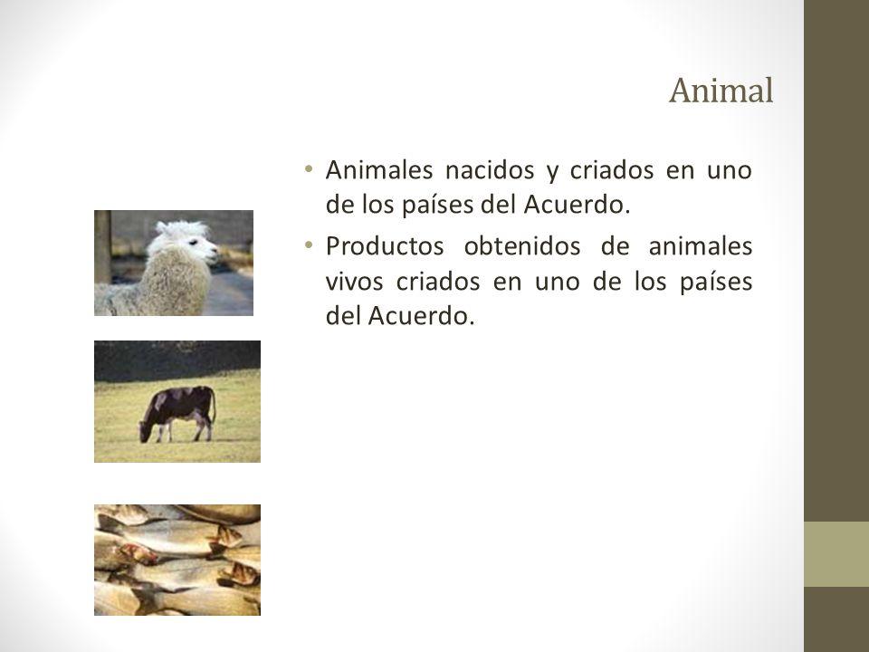 Animal Animales nacidos y criados en uno de los países del Acuerdo.