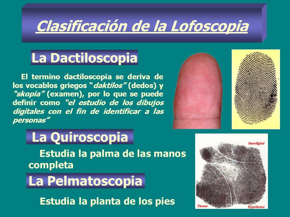 Clasificación de la Lofoscopia La Dactiloscopia El termino dactiloscopia se deriva de los vocablos griegos daktilos (dedos) y skopia (examen), por lo