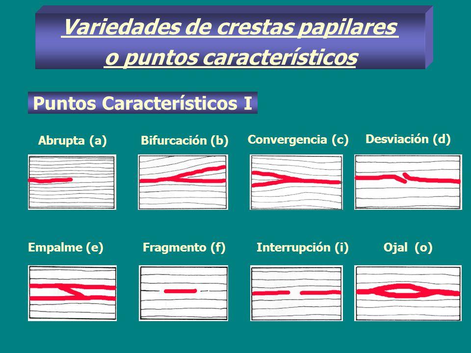 Variedades de crestas papilares o puntos característicos Puntos Característicos I Abrupta (a)Bifurcación (b) Convergencia (c) Desviación (d) Empalme (