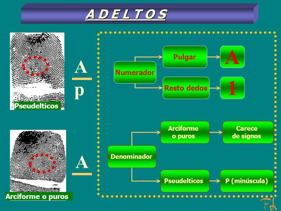 A p A Numerador Pulgar Resto dedos A 1 P (minúscula) Denominador Pseudelticos Arciforme o puros Carece de signos A D E L T O S Pseudelticos Arciforme