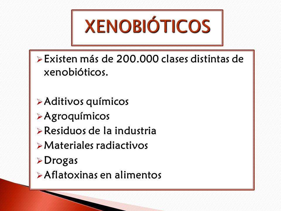 Existen más de 200.000 clases distintas de xenobióticos. Aditivos químicos Agroquímicos Residuos de la industria Materiales radiactivos Drogas Aflatox