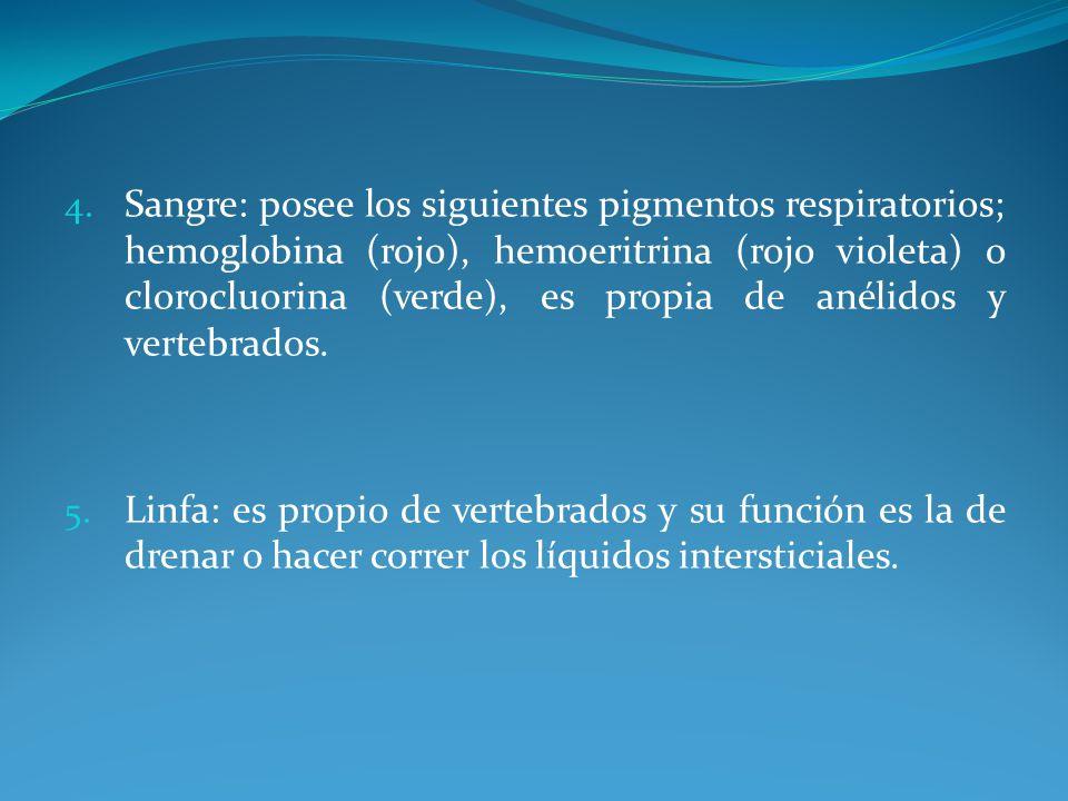 4. Sangre: posee los siguientes pigmentos respiratorios; hemoglobina (rojo), hemoeritrina (rojo violeta) o clorocluorina (verde), es propia de anélido