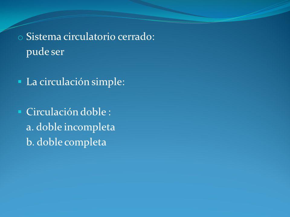 o Sistema circulatorio cerrado: pude ser La circulación simple: Circulación doble : a. doble incompleta b. doble completa