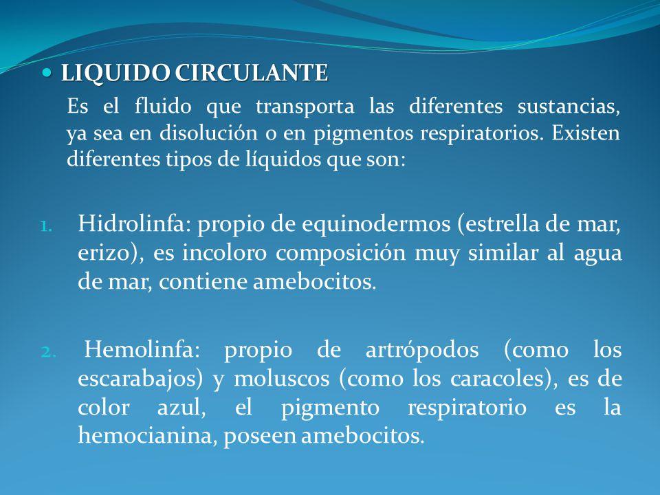 LIQUIDO CIRCULANTE LIQUIDO CIRCULANTE Es el fluido que transporta las diferentes sustancias, ya sea en disolución o en pigmentos respiratorios.