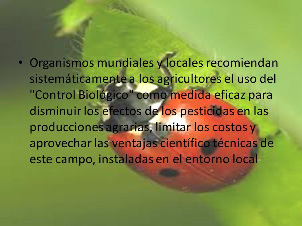 La producción agrícola y su consumo son fundamentales para el hombre.