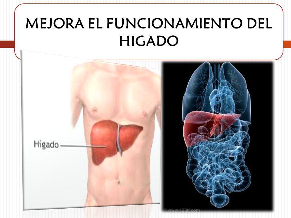 MEJORA EL FUNCIONAMIENTO DEL HIGADO