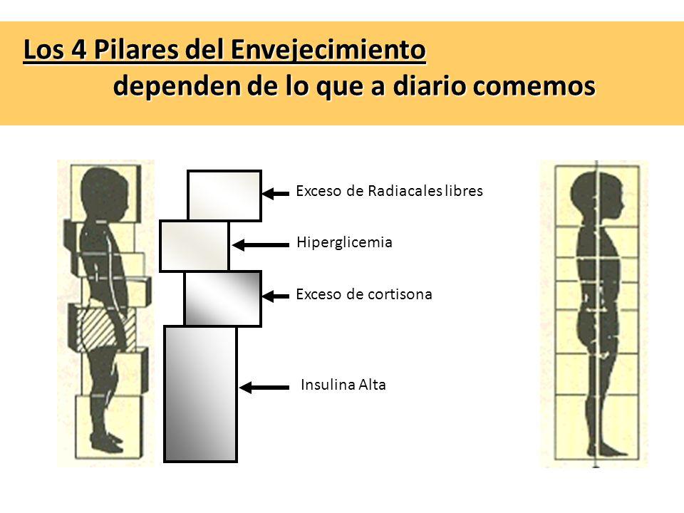 Los 4 Pilares del Envejecimiento dependen de lo que a diario comemos Exceso de Radiacales libres Hiperglicemia Exceso de cortisona Insulina Alta