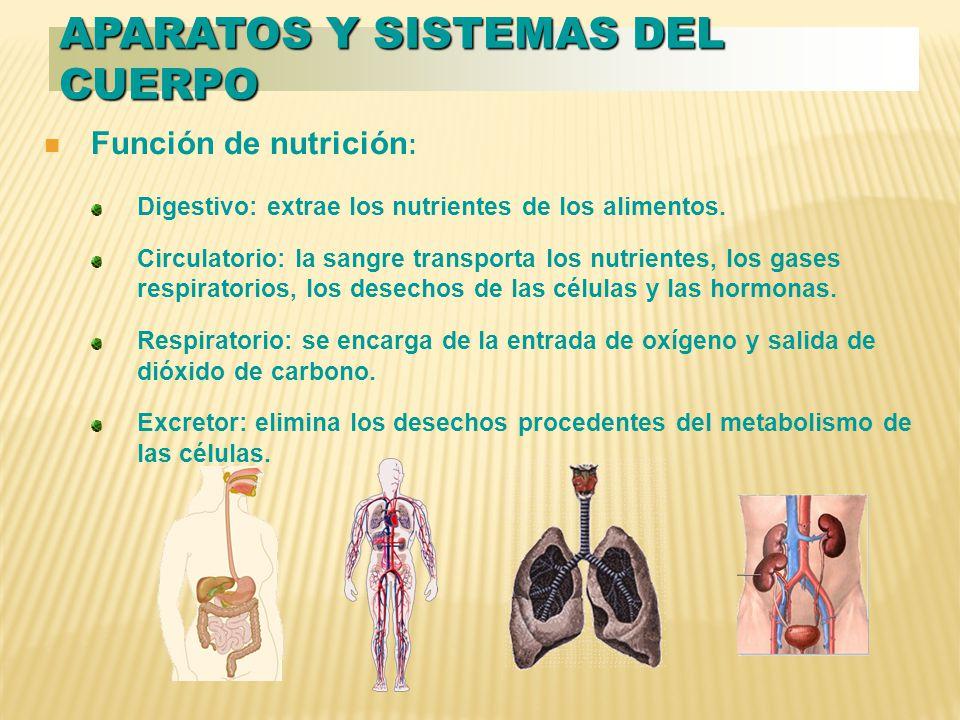 Función de nutrición : Digestivo: extrae los nutrientes de los alimentos.
