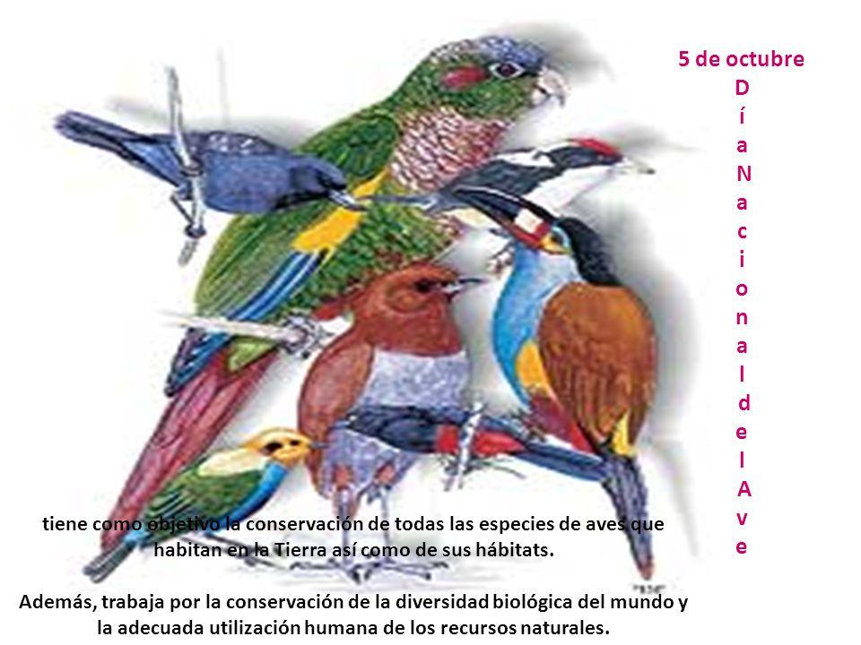 5 de octubre D í a N a c i o n a l d e l A v e tiene como objetivo la conservación de todas las especies de aves que habitan en la Tierra así como de sus hábitats.