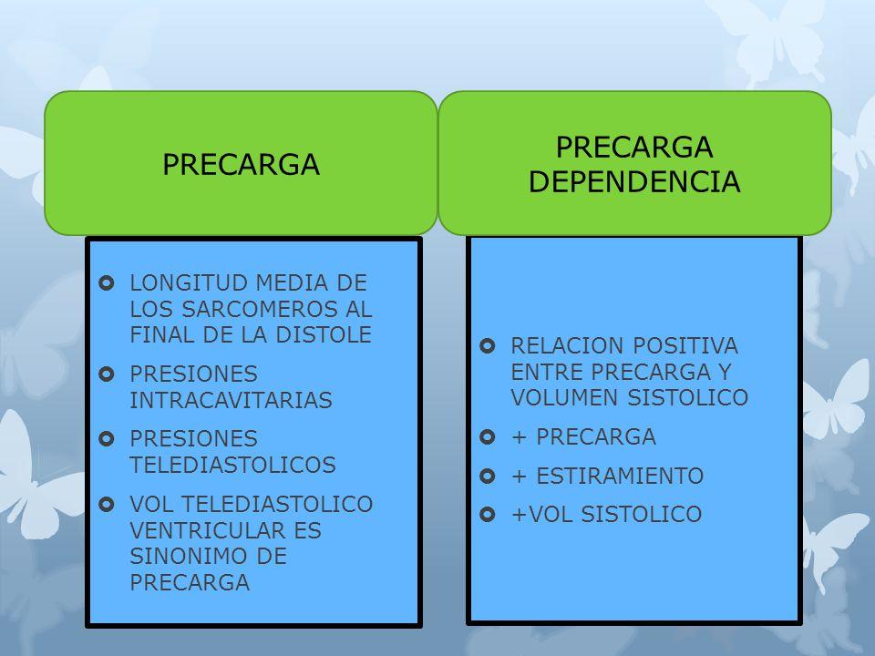 LONGITUD MEDIA DE LOS SARCOMEROS AL FINAL DE LA DISTOLE PRESIONES INTRACAVITARIAS PRESIONES TELEDIASTOLICOS VOL TELEDIASTOLICO VENTRICULAR ES SINONIMO DE PRECARGA RELACION POSITIVA ENTRE PRECARGA Y VOLUMEN SISTOLICO + PRECARGA + ESTIRAMIENTO +VOL SISTOLICO PRECARGA DEPENDENCIA