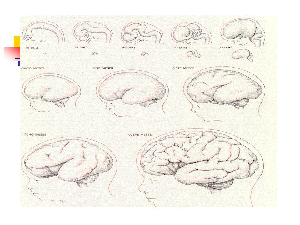 Atención - Concepto La atención es la capacidad para concentrar la actividad psíquica, es decir, el pensamiento sobre un determinado objeto.