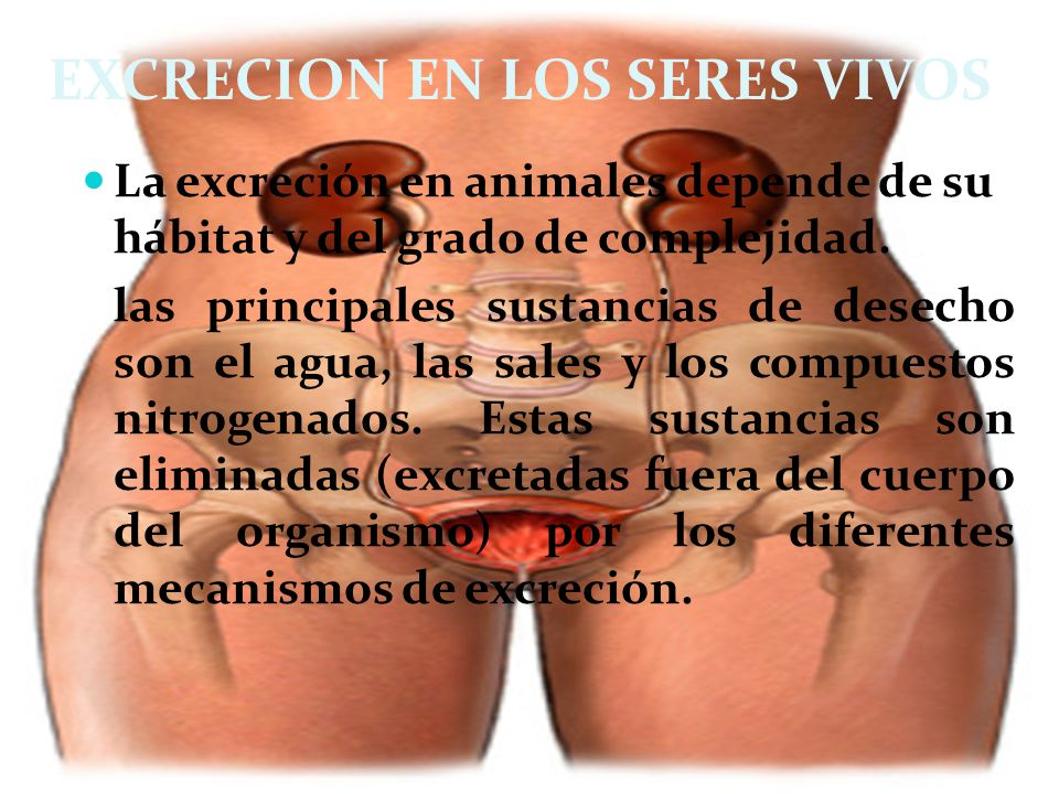 EXCRECION EN LOS SERES VIVOS La excreción en animales depende de su hábitat y del grado de complejidad. las principales sustancias de desecho son el a