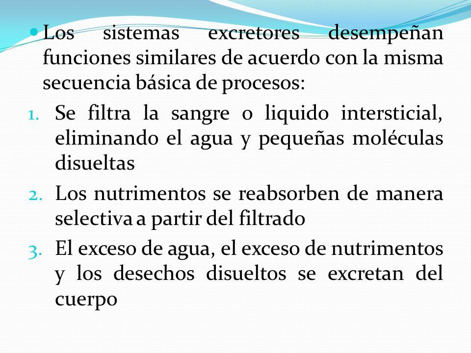 Los sistemas excretores desempeñan funciones similares de acuerdo con la misma secuencia básica de procesos: 1. Se filtra la sangre o liquido intersti