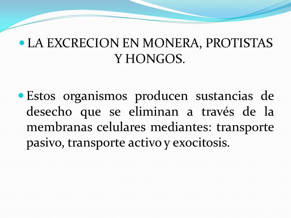 LA EXCRECION EN MONERA, PROTISTAS Y HONGOS. Estos organismos producen sustancias de desecho que se eliminan a través de la membranas celulares mediant