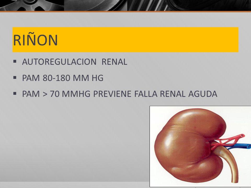 RIÑON AUTOREGULACION RENAL PAM 80-180 MM HG PAM > 70 MMHG PREVIENE FALLA RENAL AGUDA