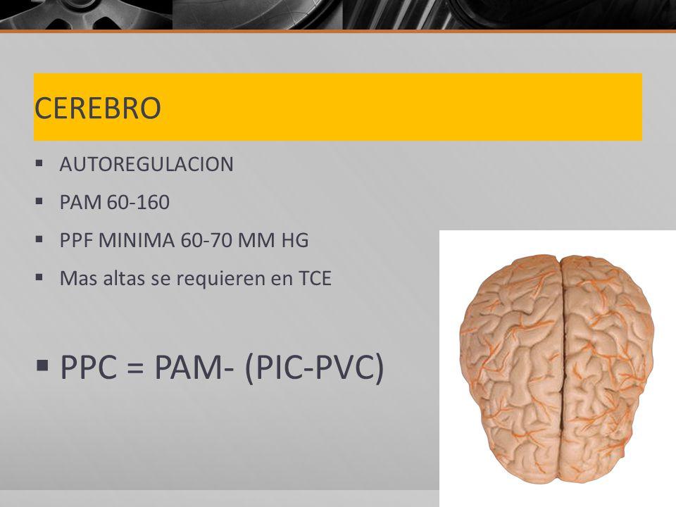 CEREBRO AUTOREGULACION PAM 60-160 PPF MINIMA 60-70 MM HG Mas altas se requieren en TCE PPC = PAM- (PIC-PVC)