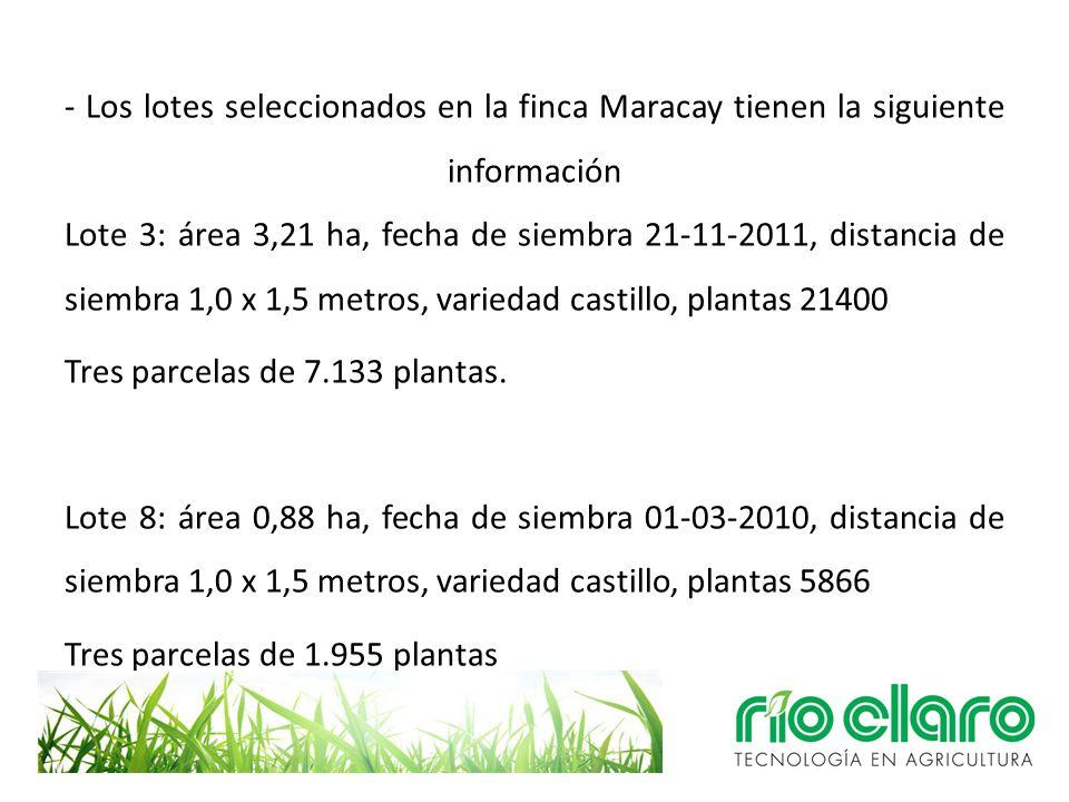 - Los lotes seleccionados en la finca Maracay tienen la siguiente información Lote 3: área 3,21 ha, fecha de siembra 21-11-2011, distancia de siembra
