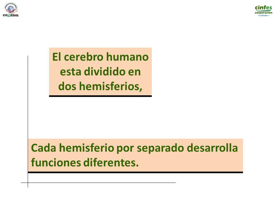 El cerebro humano esta dividido en dos hemisferios, El cerebro humano esta dividido en dos hemisferios, Cada hemisferio por separado desarrolla funcio
