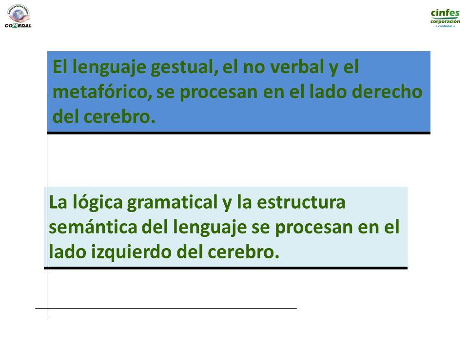 El lenguaje gestual, el no verbal y el metafórico, se procesan en el lado derecho del cerebro. El lenguaje gestual, el no verbal y el metafórico, se p