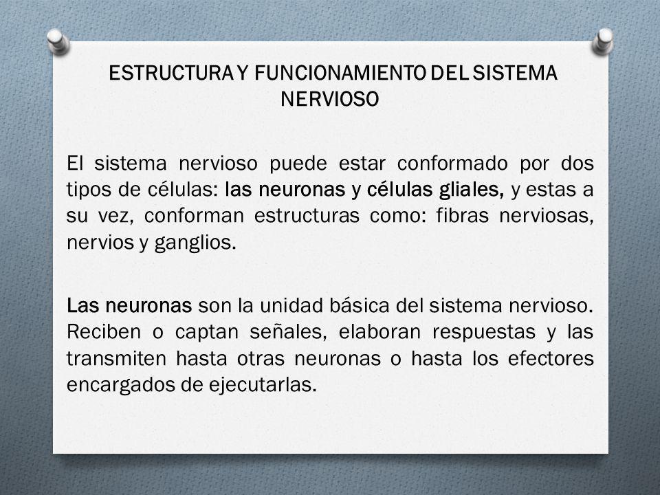 ESTRUCTURA Y FUNCIONAMIENTO DEL SISTEMA NERVIOSO El sistema nervioso puede estar conformado por dos tipos de células: las neuronas y células gliales,