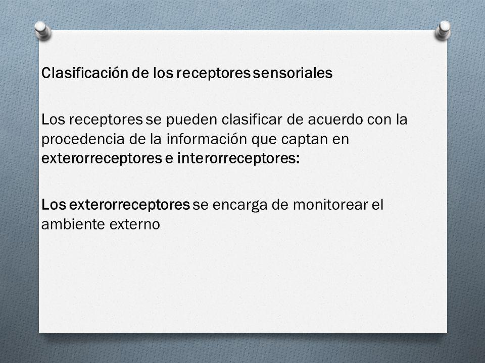 Clasificación de los receptores sensoriales Los receptores se pueden clasificar de acuerdo con la procedencia de la información que captan en exterorr
