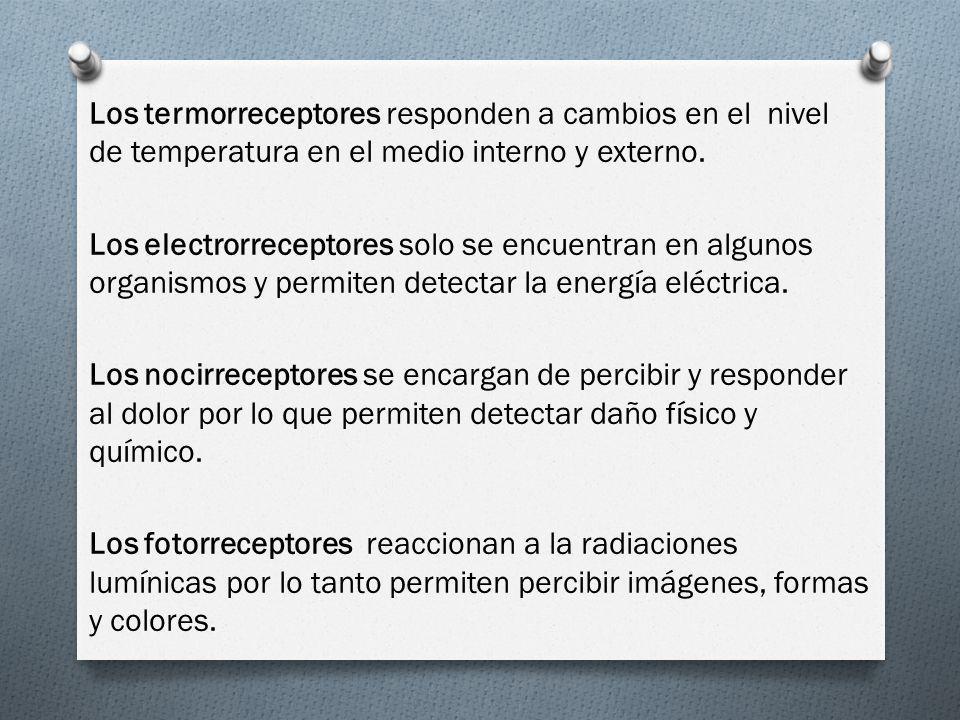 Los termorreceptores responden a cambios en el nivel de temperatura en el medio interno y externo. Los electrorreceptores solo se encuentran en alguno