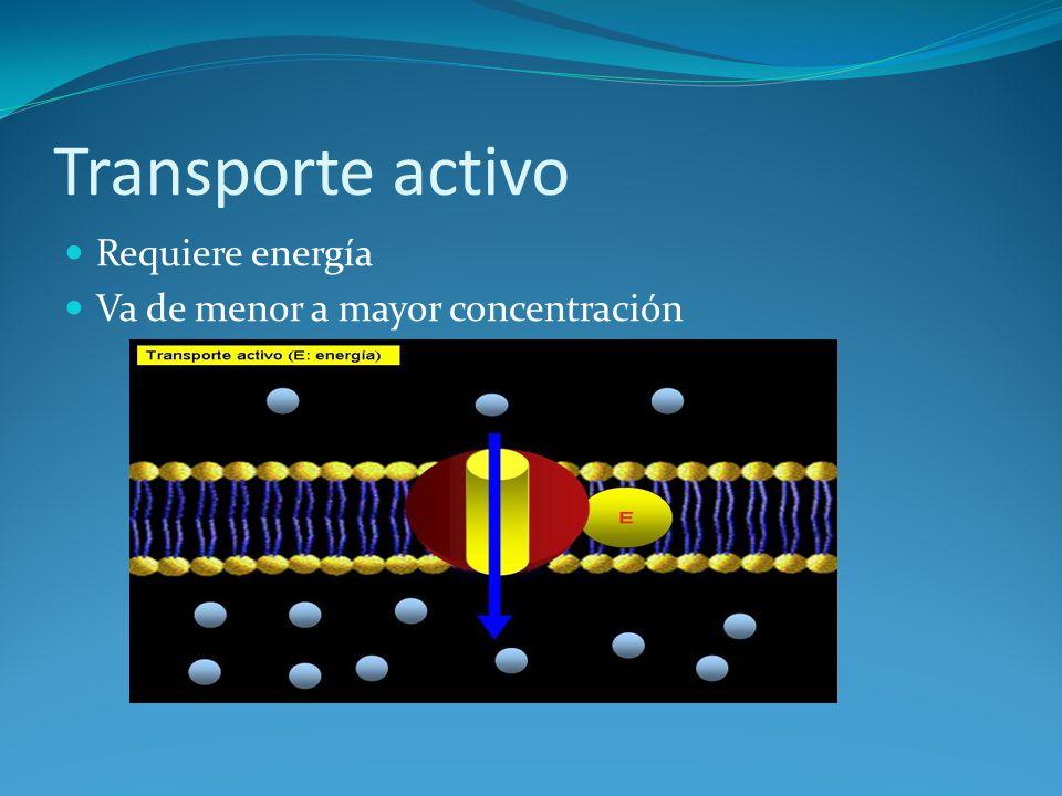 Transporte activo Requiere energía Va de menor a mayor concentración