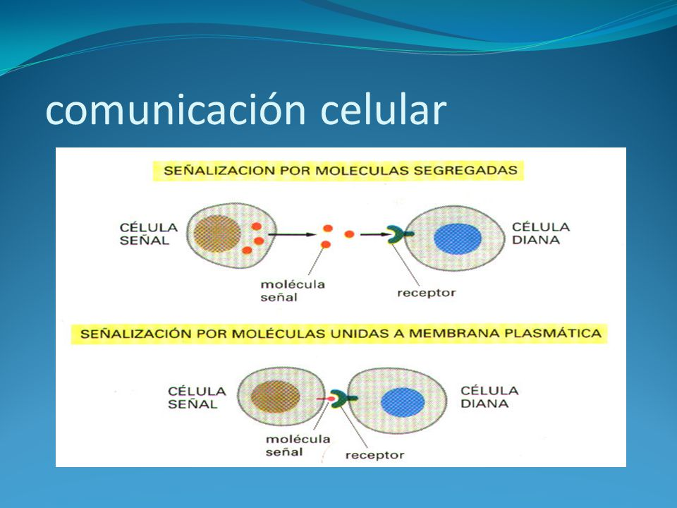 comunicación celular