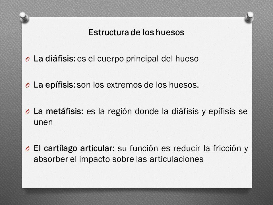 Estructura de los huesos O La diáfisis: es el cuerpo principal del hueso O La epífisis: son los extremos de los huesos. O La metáfisis: es la región d