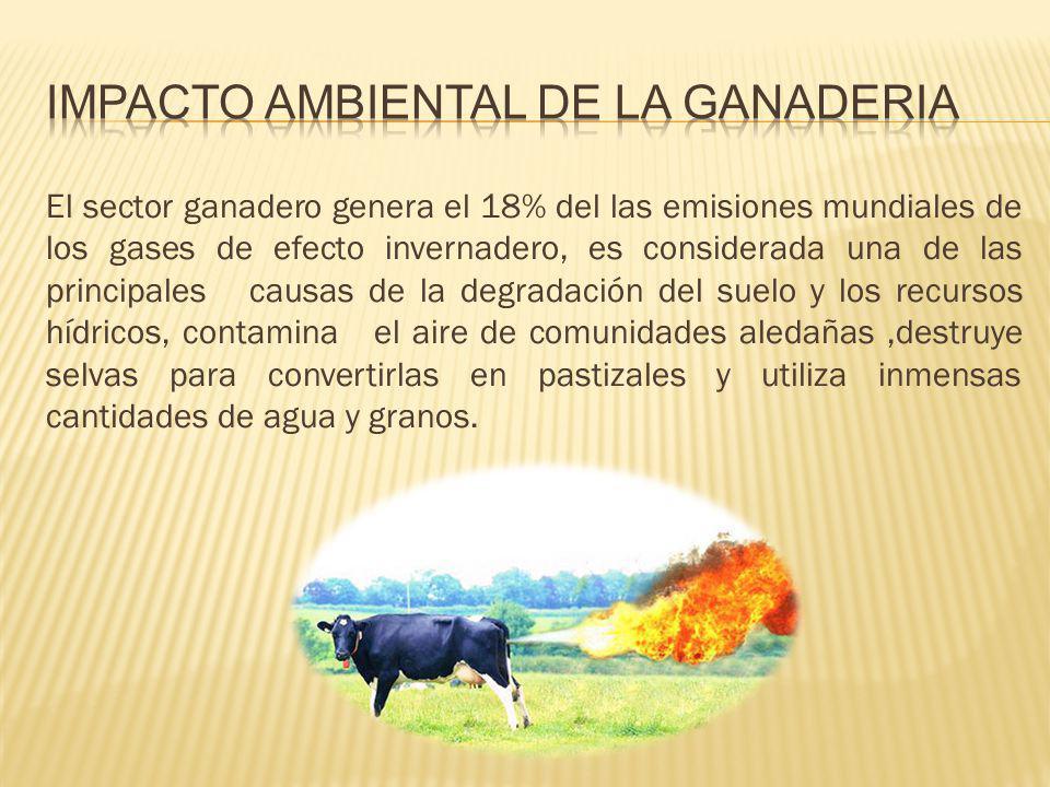 El sector ganadero genera el 18% del las emisiones mundiales de los gases de efecto invernadero, es considerada una de las principales causas de la de