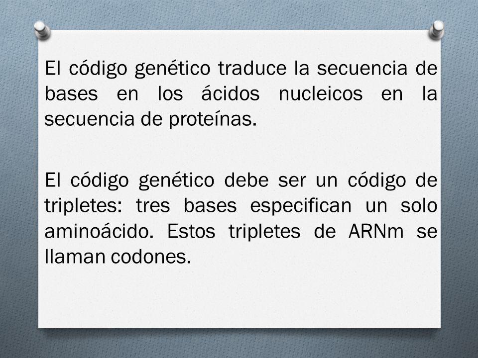 El código genético traduce la secuencia de bases en los ácidos nucleicos en la secuencia de proteínas.