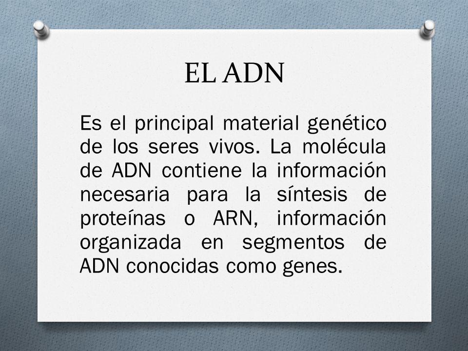 EL ADN Es el principal material genético de los seres vivos.