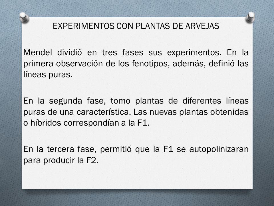 EXPERIMENTOS CON PLANTAS DE ARVEJAS Mendel dividió en tres fases sus experimentos.