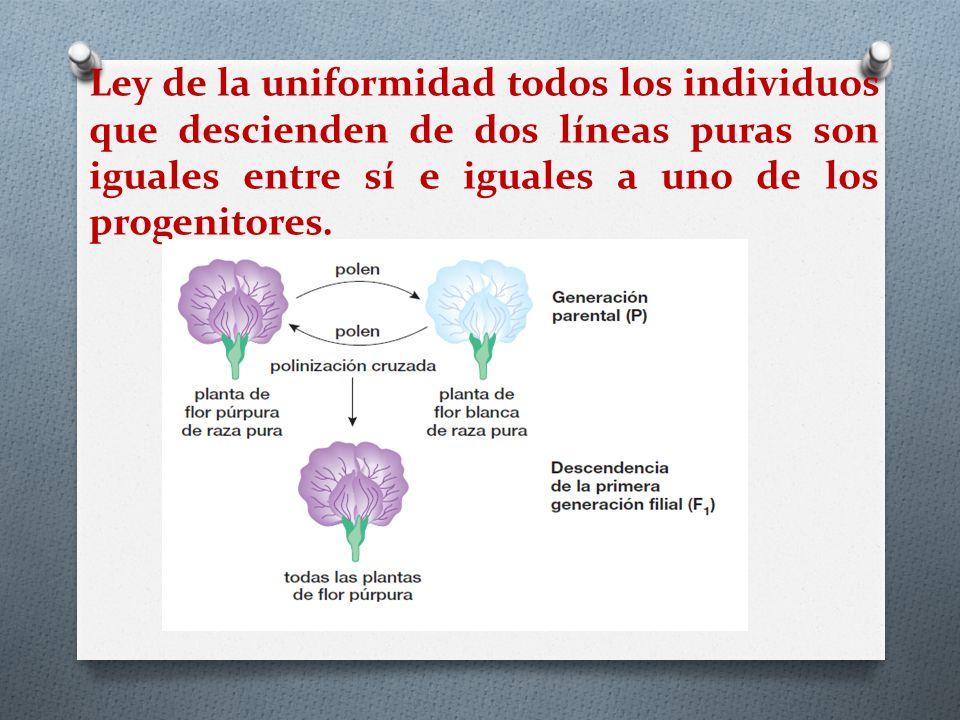 Ley de la uniformidad todos los individuos que descienden de dos líneas puras son iguales entre sí e iguales a uno de los progenitores.