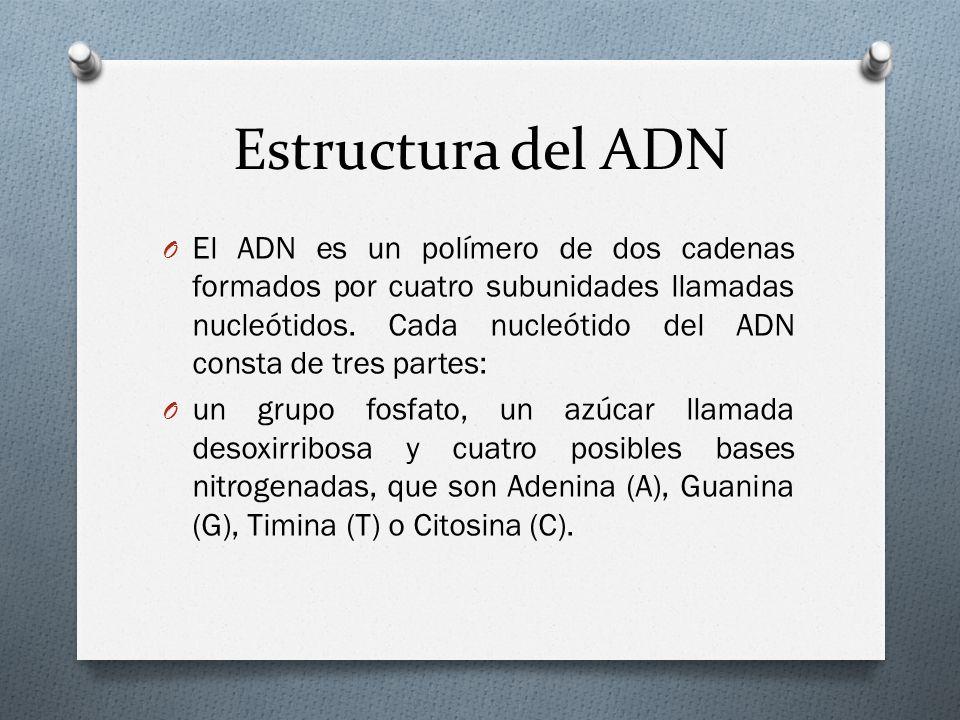 Estructura del ADN O El ADN es un polímero de dos cadenas formados por cuatro subunidades llamadas nucleótidos.