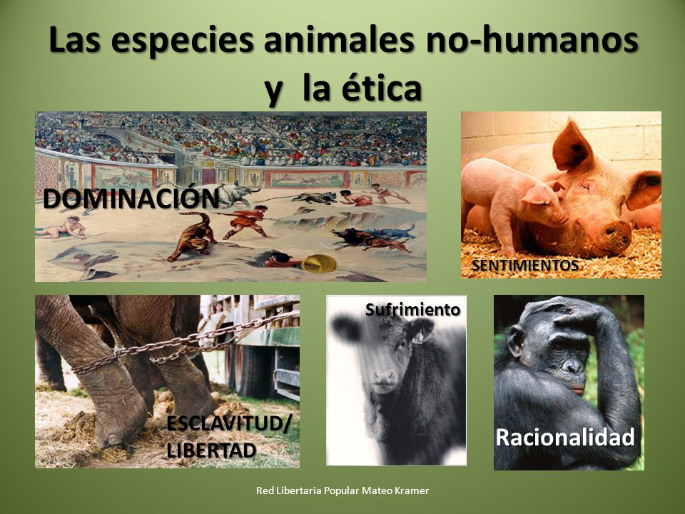 Las especies animales no-humanos y la ética Red Libertaria Popular Mateo Kramer Racionalidad Sufrimiento ESCLAVITUD/ LIBERTAD SENTIMIENTOS DOMINACIÓN