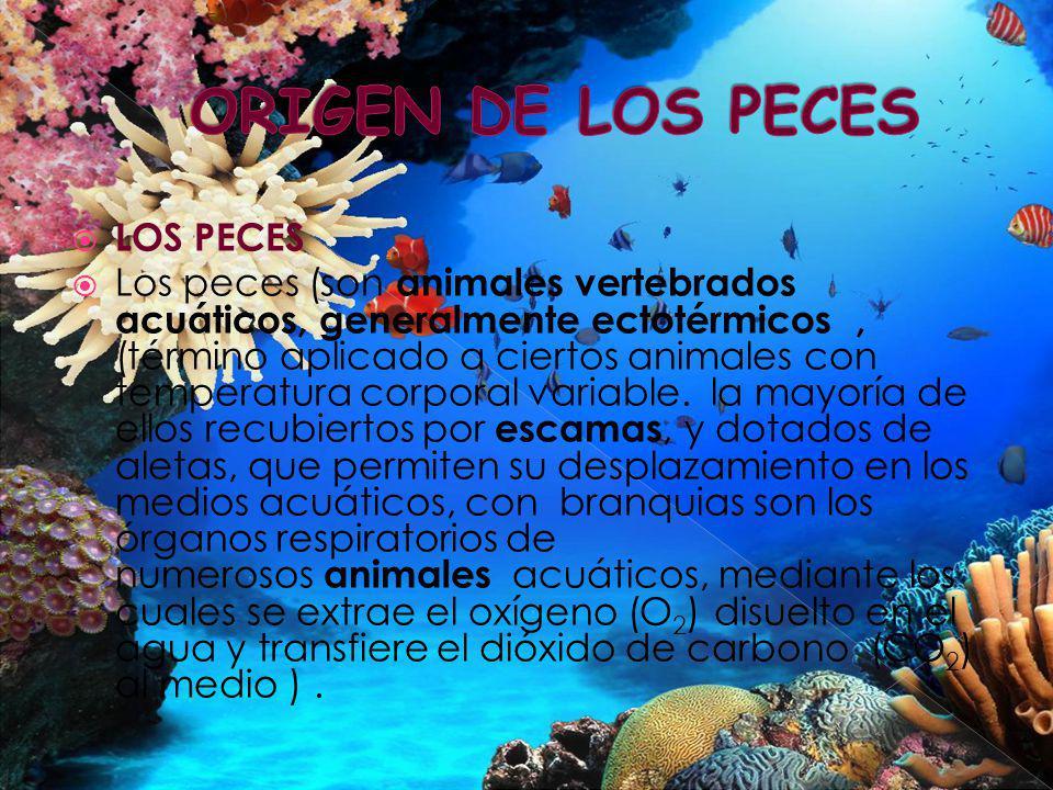 LOS PECES Los peces (son animales vertebrados acuáticos, generalmente ectotérmicos, (término aplicado a ciertos animales con temperatura corporal vari