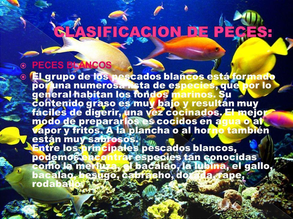 PECES BLANCOS El grupo de los pescados blancos está formado por una numerosa lista de especies, que por lo general habitan los fondos marinos. Su cont