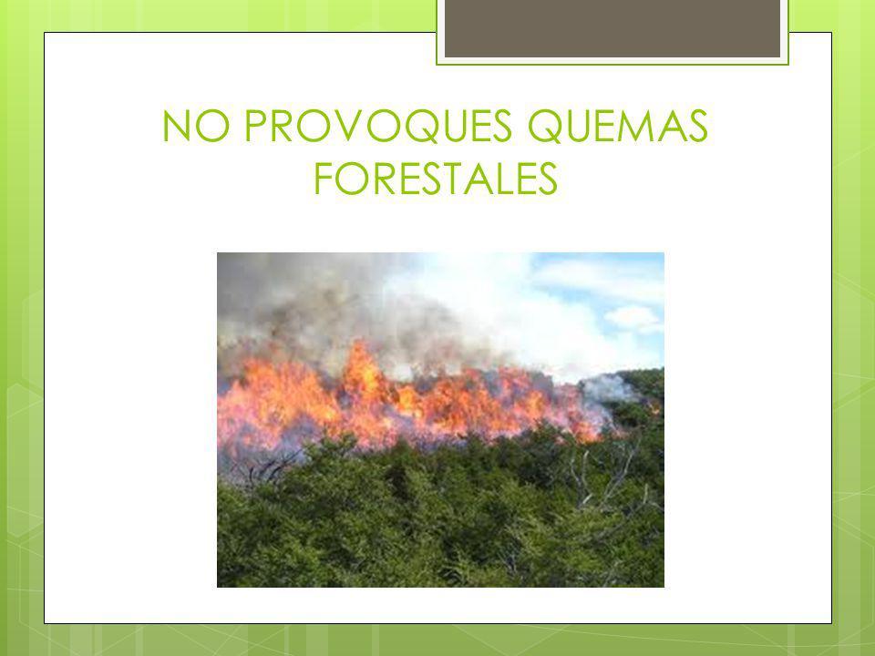 NO PROVOQUES QUEMAS FORESTALES