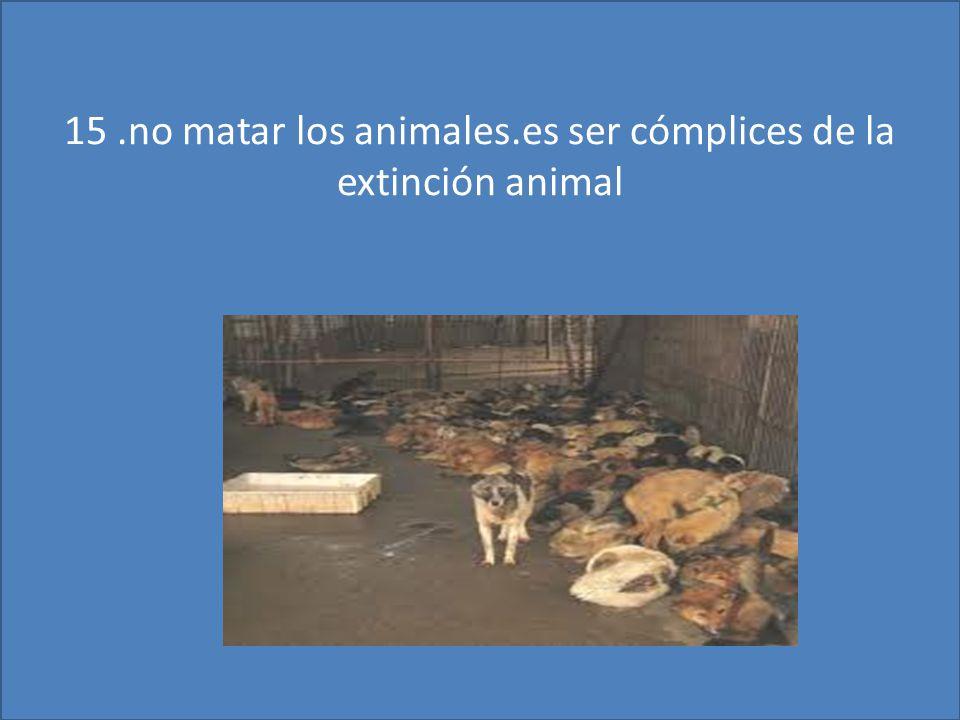 15.no matar los animales.es ser cómplices de la extinción animal