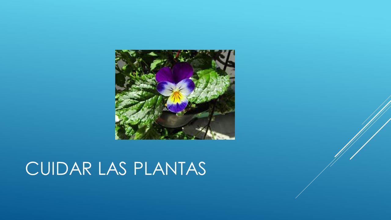 CUIDAR LAS PLANTAS