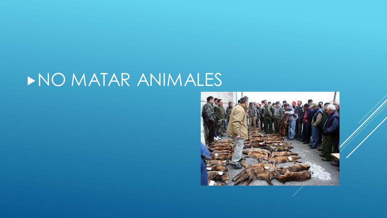 NO MATAR ANIMALES