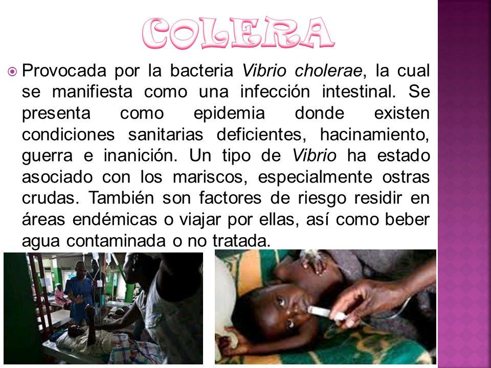 Provocada por la bacteria Vibrio cholerae, la cual se manifiesta como una infección intestinal. Se presenta como epidemia donde existen condiciones sa